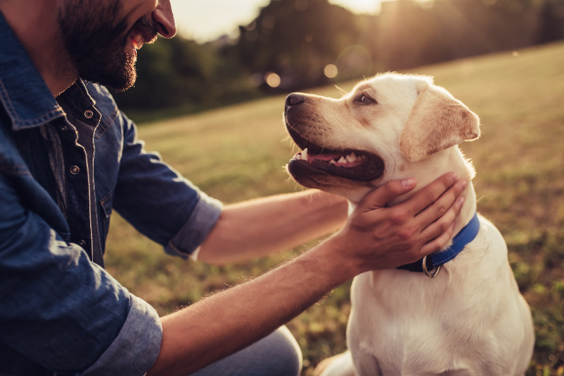 BK Insurance offers Pet Insurance in Ravenna and Kent, Ohio